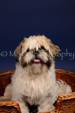 M&N Photography -IMG_4654