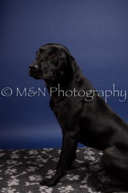 M&N Photography -IMG_4782