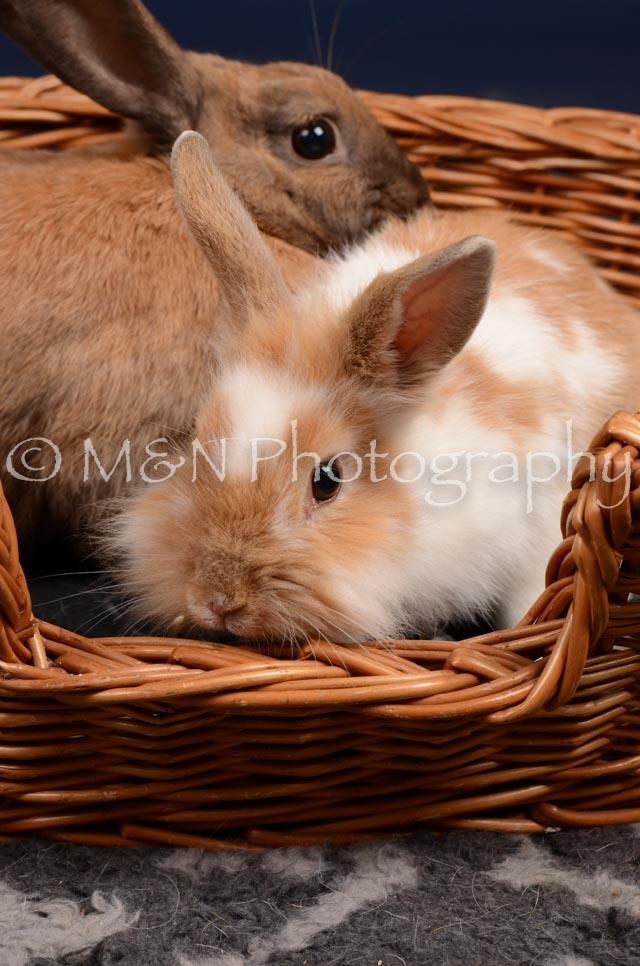 M&N Photography -DSC_0771