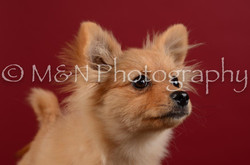 M&N Photography -DSC_3243
