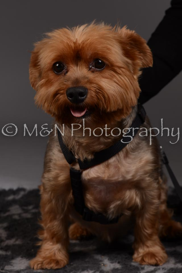 M&N Photography -DSC_2138