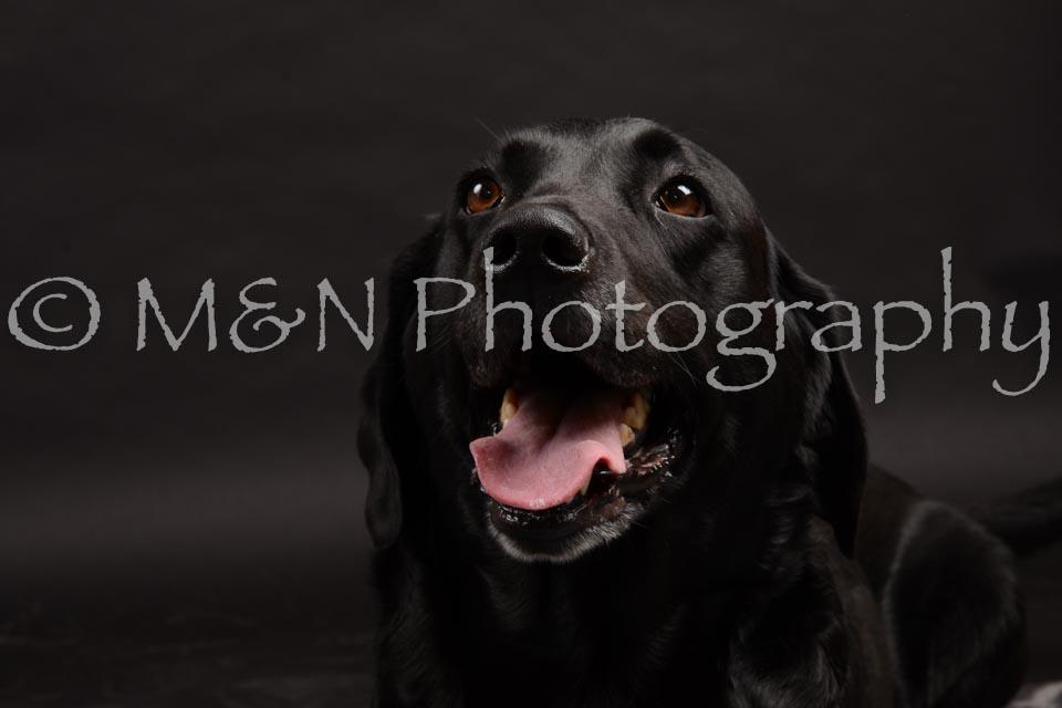 M&N Photography -DSC_0074