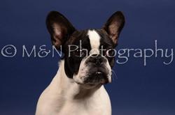 M&N Photography -IMG_4750
