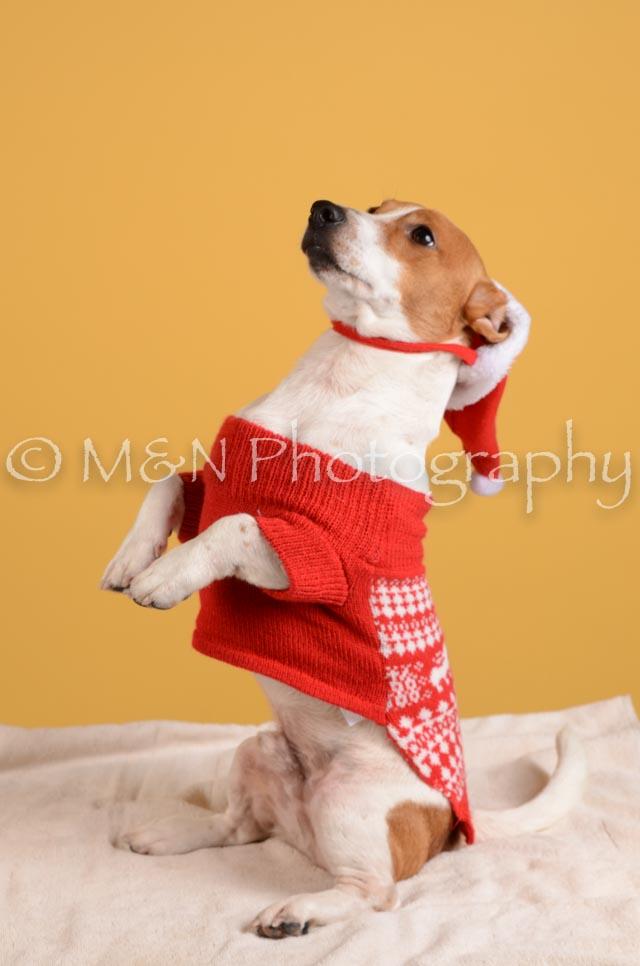 M&N Photography -DSC_4865
