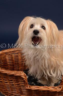 M&N Photography -DSC_0832