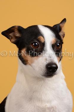 M&N Photography -DSC_4520