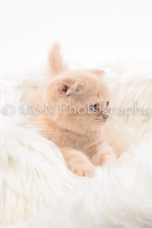 M&N Photography -DSC_8833