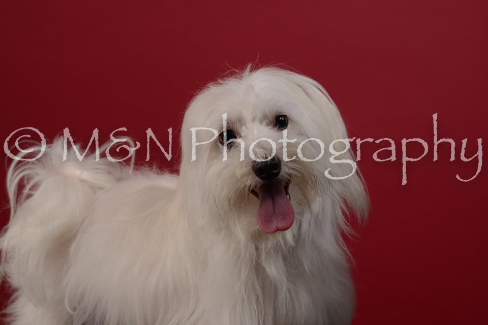 M&N Photography -DSC_3063