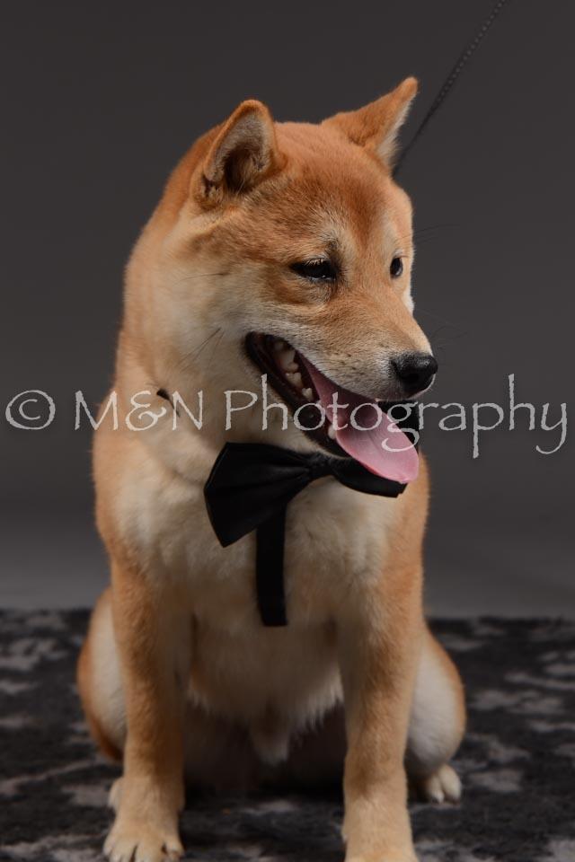 M&N Photography -DSC_2155