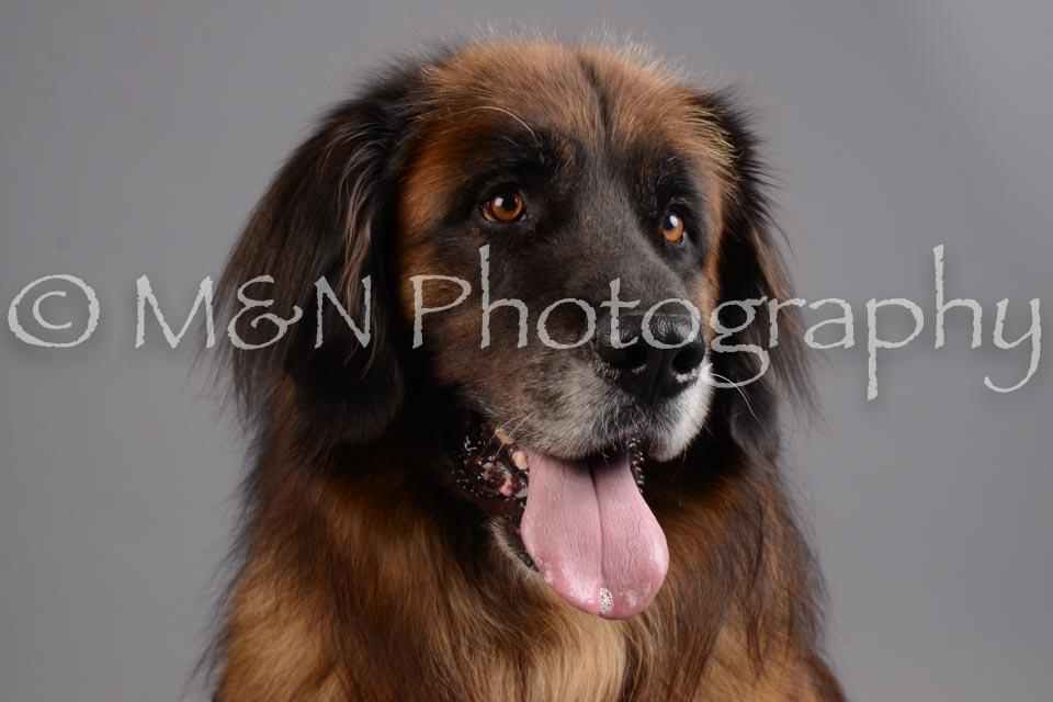 M&N Photography -DSC_2670