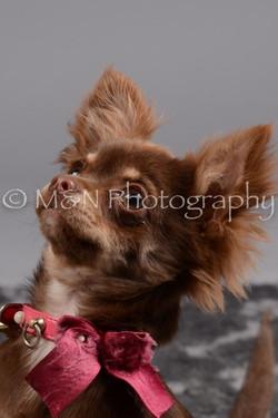 M&N Photography -DSC_2553