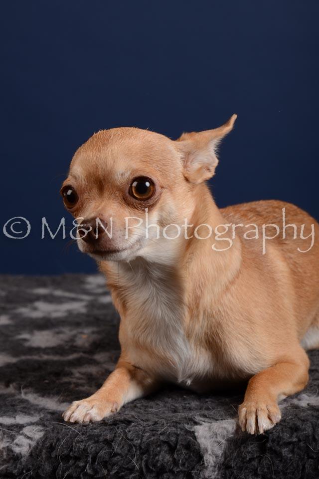 M&N Photography -DSC_4100