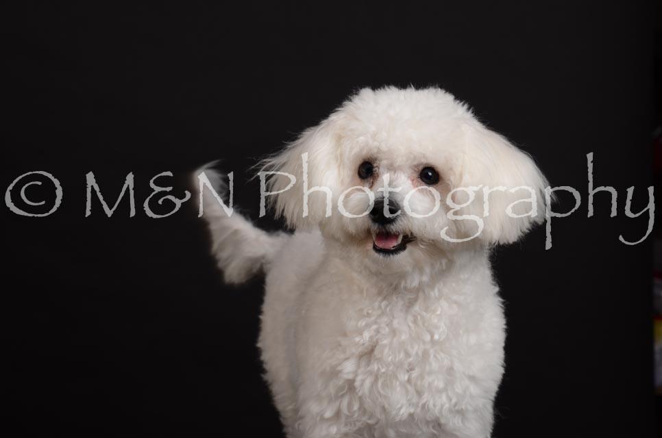M&N Photography -DSC_5599