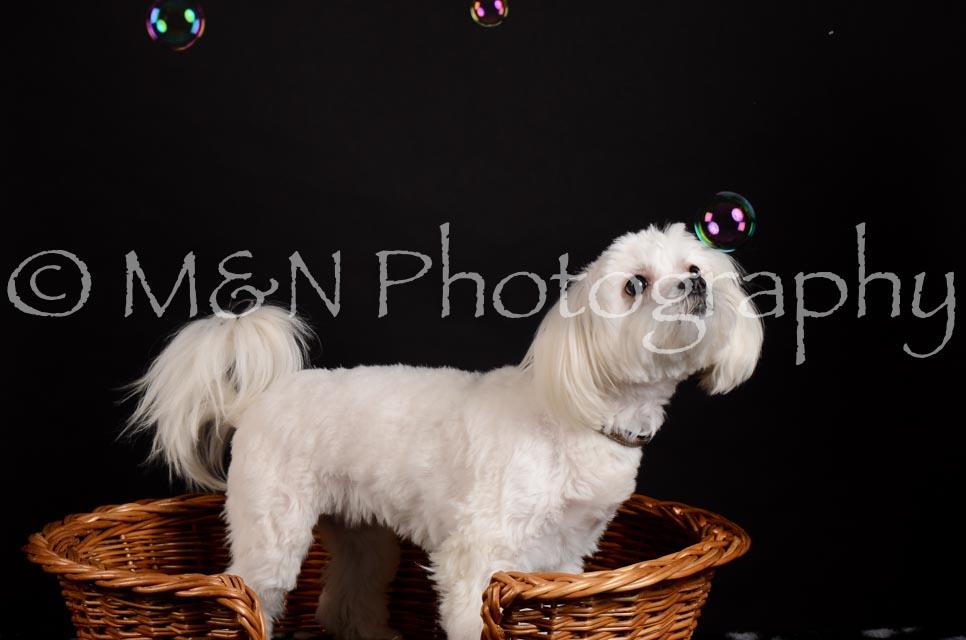 M&N Photography -DSC_5531
