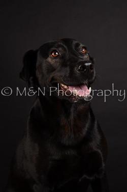 M&N Photography -DSC_5796