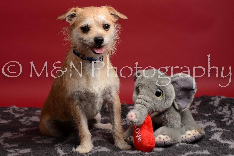M&N Photography -DSC_8575
