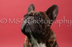 M&N Photography -DSC_6633