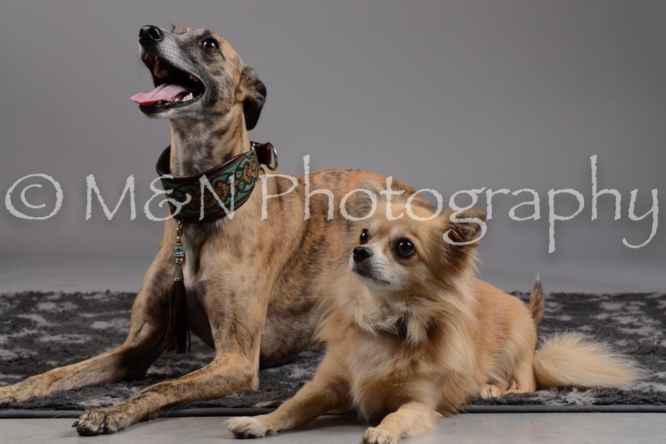 M&N Photography -DSC_1778