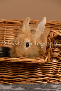 M&N Photography -_SNB0954