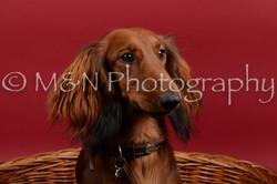 M&N Photography -DSC_8533