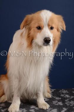 M&N Photography -DSC_3935