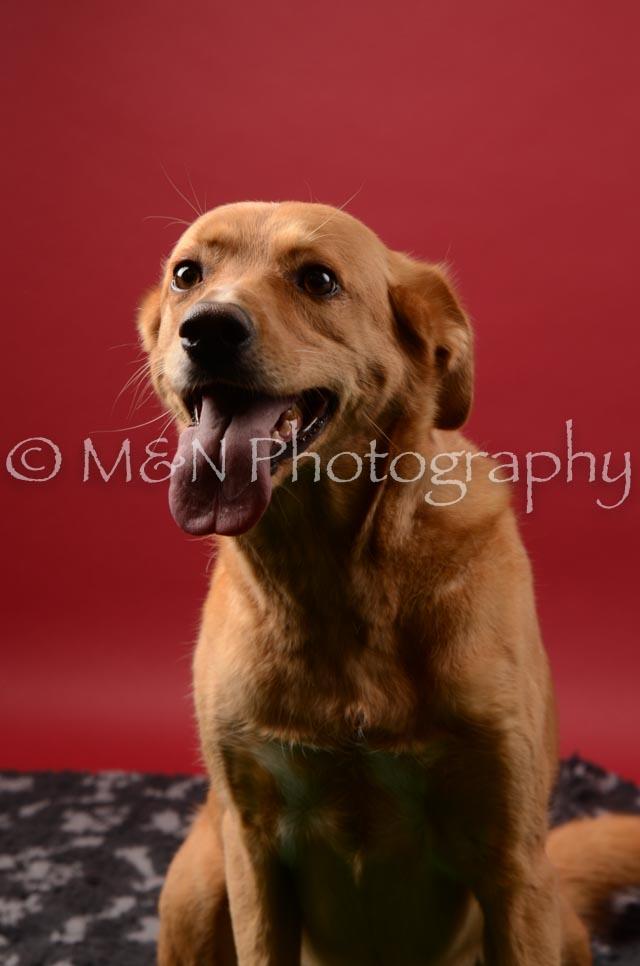 M&N Photography -DSC_6733