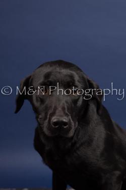 M&N Photography -IMG_4770