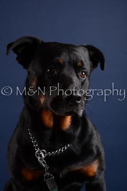 M&N Photography -DSC_3991