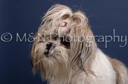 M&N Photography -DSC_4373