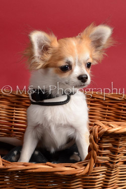 M&N Photography -DSC_8597