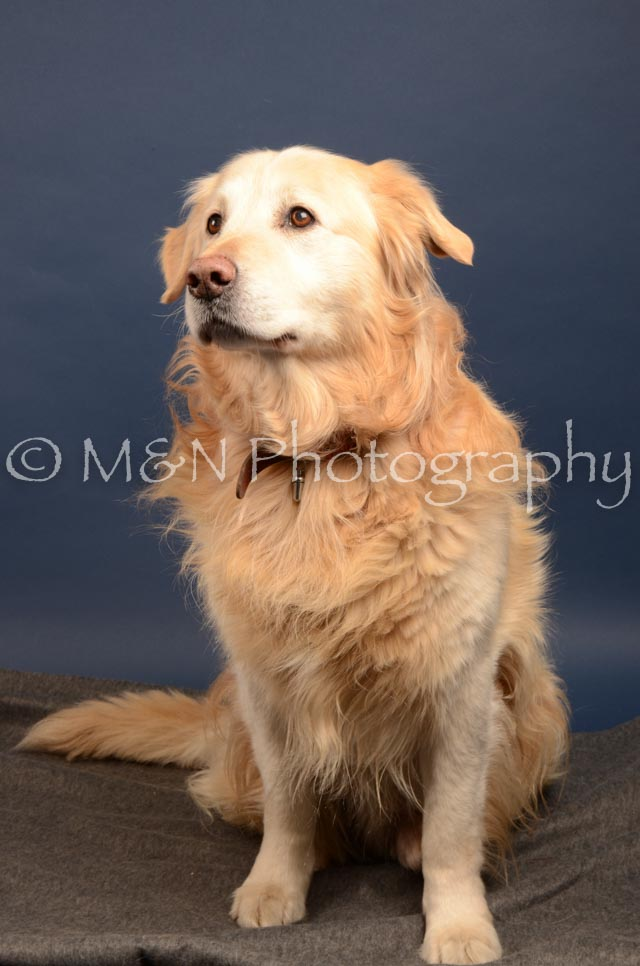 M&N Photography -DSC_4261