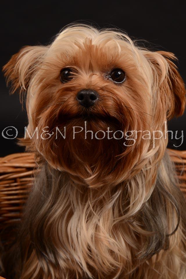 M&N Photography -DSC_9713