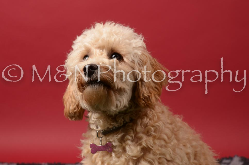 M&N Photography -DSC_6684