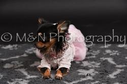 M&N Photography -DSC_2509