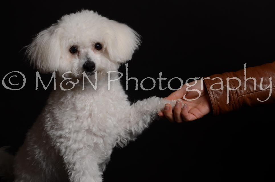 M&N Photography -DSC_5604