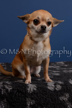 M&N Photography -DSC_5288