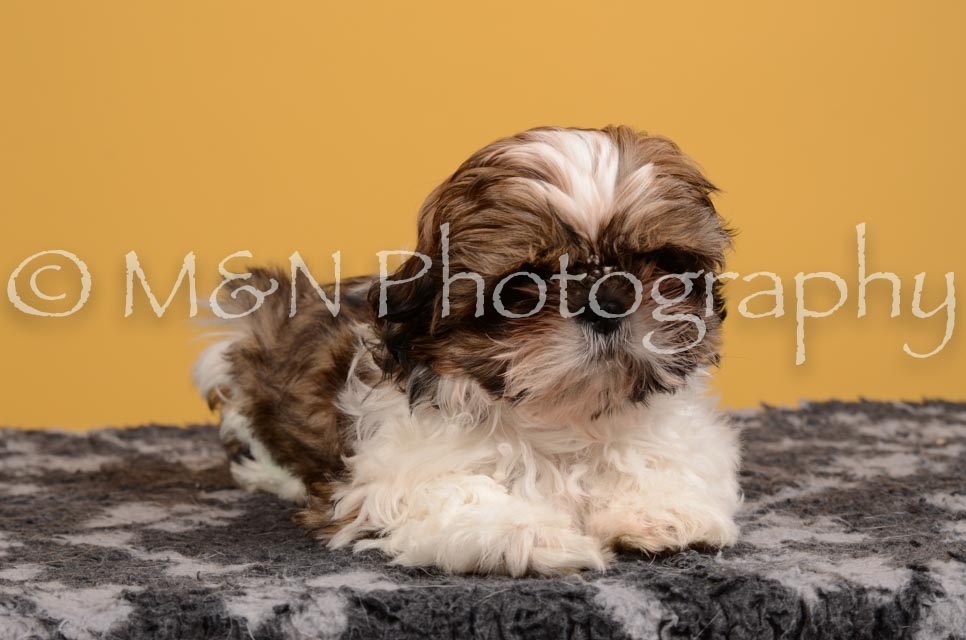 M&N Photography -DSC_4556