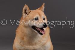 M&N Photography -DSC_2070