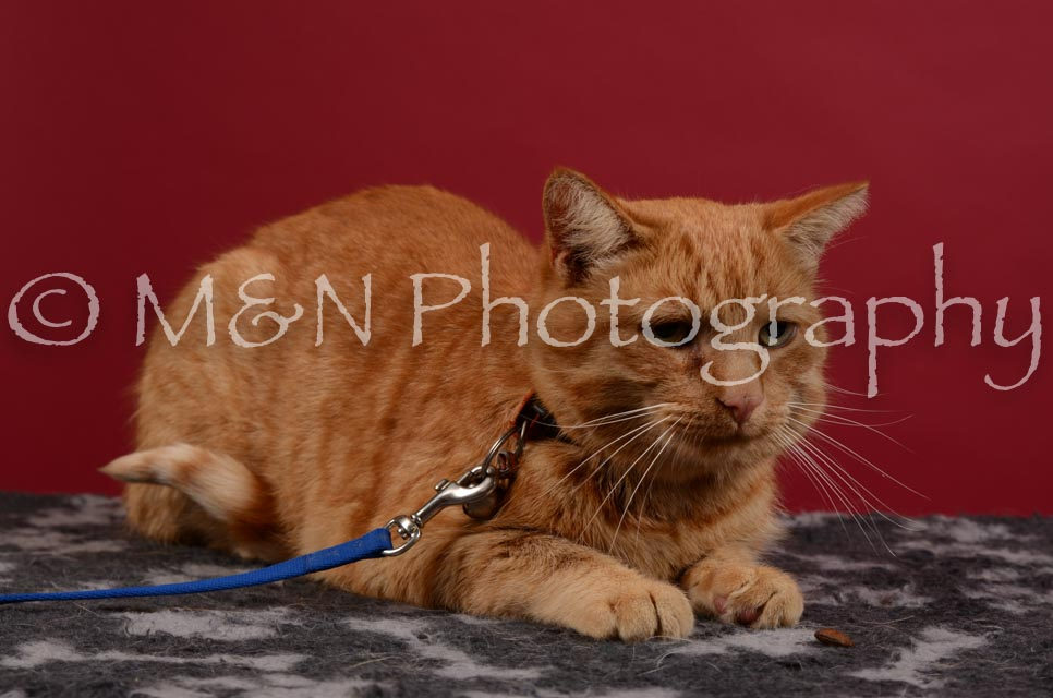 M&N Photography -DSC_3445