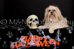 M&N Photography -DSC_5733