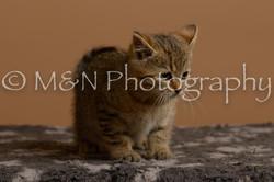 M&N Photography -_SNB0832