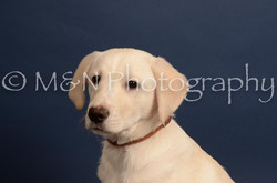 M&N Photography -DSC_4392