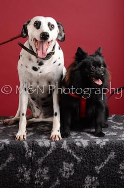 M&N Photography -DSC_3116