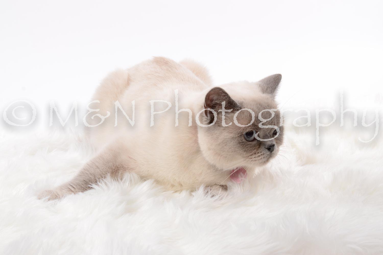 M&N Photography -DSC_8799