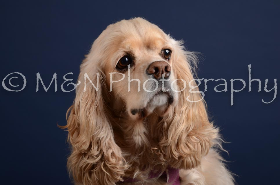 M&N Photography -DSC_4017