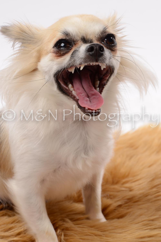 M&N Photography -DSC_9063