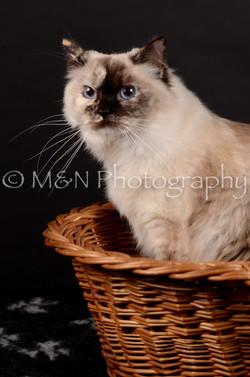 M&N Photography -DSC_5559