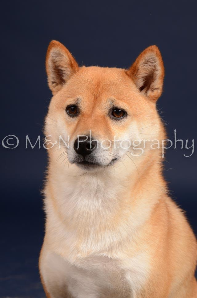 M&N Photography -DSC_0367