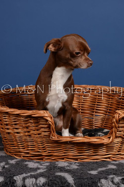 M&N Photography -DSC_5123