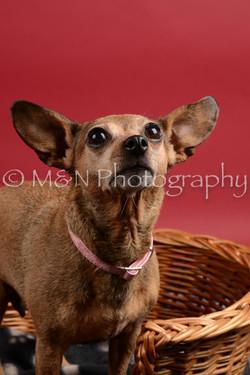 M&N Photography -DSC_8661